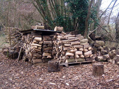 Wood pile attracting mosquitoes
