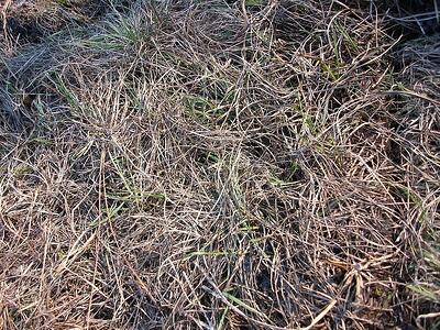 dead grass in backyard