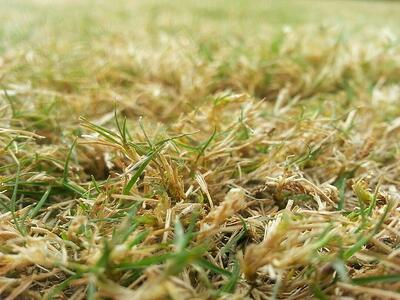 Aerating Vs Dethatching What S Best For My Lawn In Cincinnati