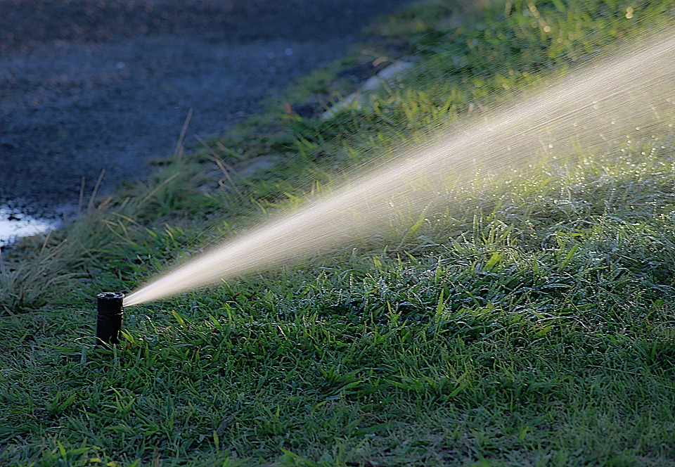 Proper watering is key to a thicker lawn