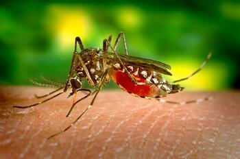Mosquito biting skin in lawn without mosquito control