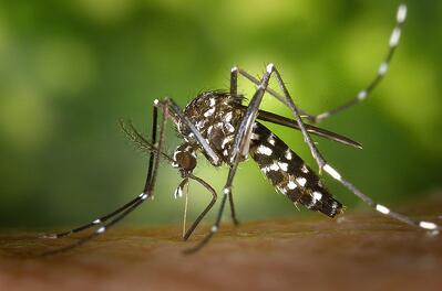 outdoor-mosquito-control-cincinnati-dayton