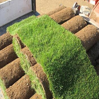 sod for lawns
