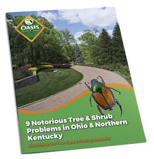 Tree and shrub problems in Cincinnati, Dayton, OH, and Northern Kentucky.