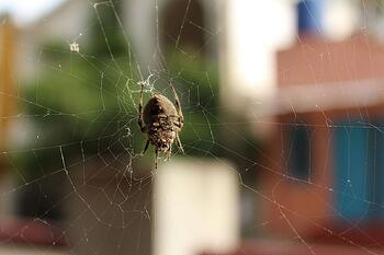 Spider in web needs pest control