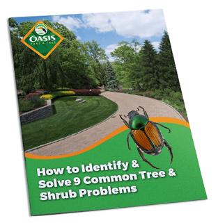 Tree & Shrub Tip Sheet Cover v2