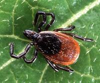 Tick Control in Cincinnati, Dayton, Ohio and Northern Kentucky