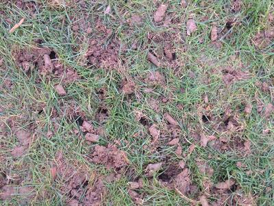 What is the best grass seed for Cincinnati, Dayton, Ohio or Northern Kentucky?