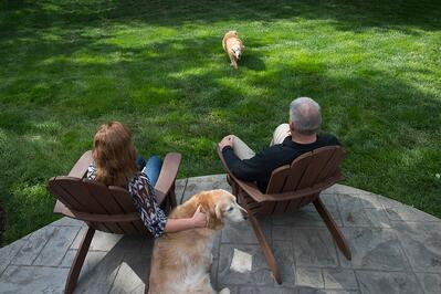 Dogs in lawn with pet safe lawn care