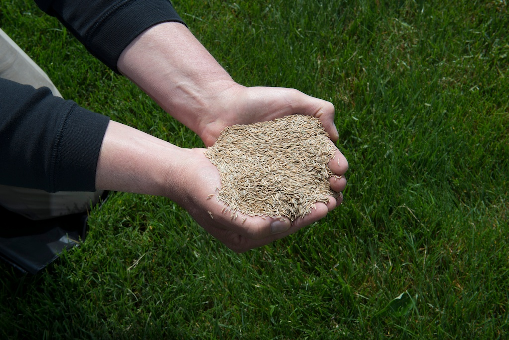 lawn-care-grass-seed-2
