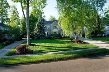 Lawn and trees treated by best lawn care service in Cincinnati