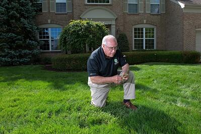 lawn weed inspection