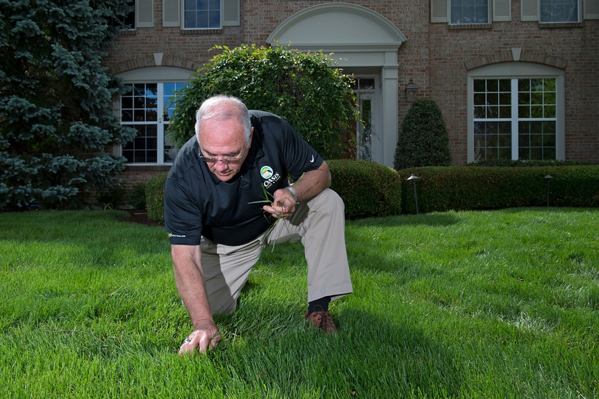 Lawn inspection to kill weeds in Cincinnati, OH