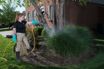 Technician applying mosquito control treatment to shrub