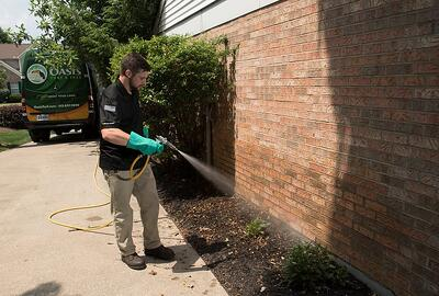 professional spraying perimeter pest control
