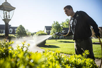 plant health care technician spraying shrubs