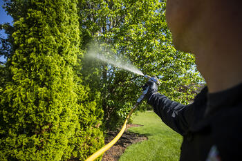 Technician spraying fall tree fertilizer