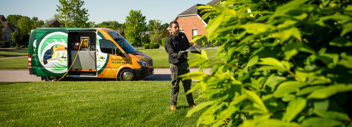 tree and shrub care cincinnati dayton oh northern kentucky