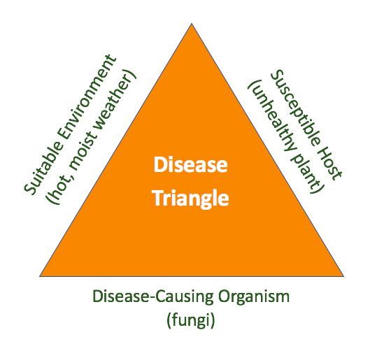 tree disease triangle