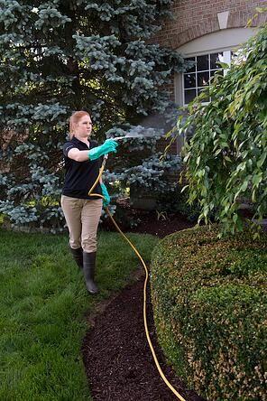 Winter tree and shrub pest defense treatment spray