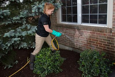 Pest control technician spraying near shrubs outside home