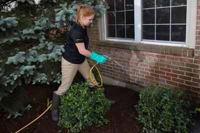 Pest control technician spraying near shrubs outside home