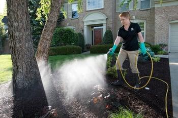 Tick treatment being applied to lawn in Cincinnati