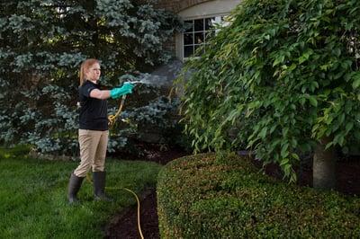 tree-care-spraying-8