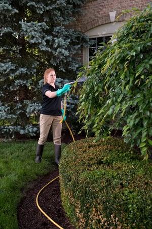 tree-care-spraying-9