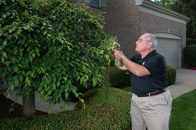 Tree inspection for insects and diseases