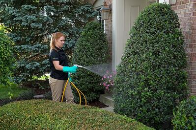 tree and shrub spraying by Oasis in Cincinnati