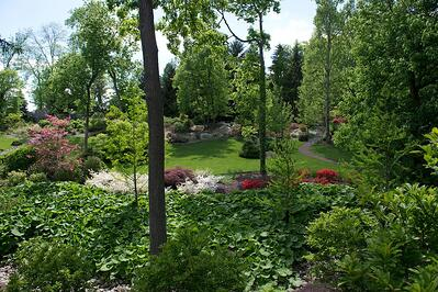 Trees and shrubs in Ohio