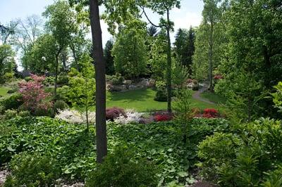 trees-and-shrubs-2