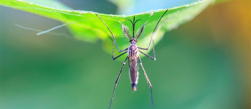 Lawn Safe Mosquito Control in Ohio