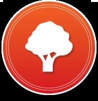 Tree Shrubs Care