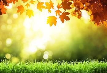Essential fall lawn care tasks for Cinicnnati, Dayton OH and N. Kentucky