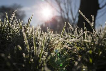grass in winter with weeds