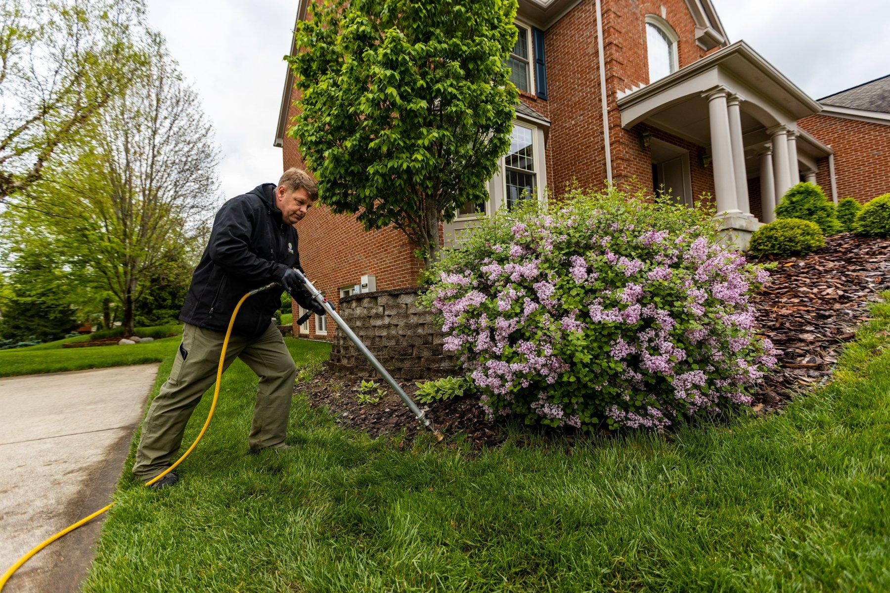 Spraying underneath shrub