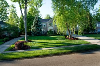 Lawn appearance after switching lawn care companies