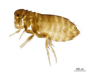 Flea and tick control for lawns to reduce pests in Cininnati, Dayton, Ohio and Northern Kentucky.