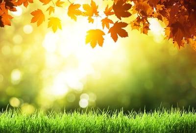 lawn getting sunlight