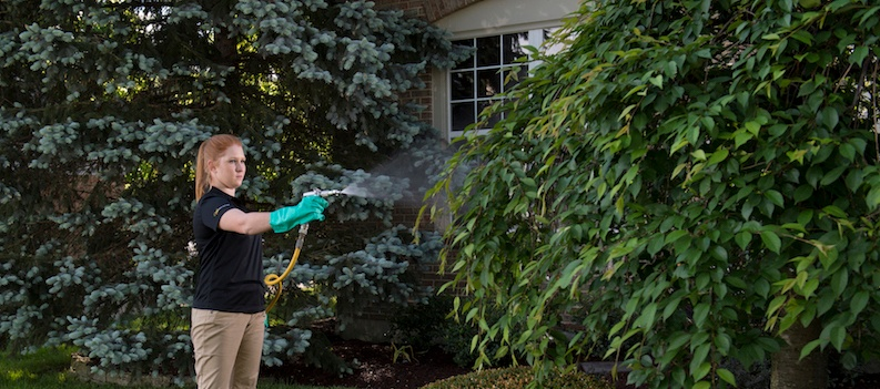 Tree and shrub care in Cincinnati, Dayton OH and Northern Kentucky