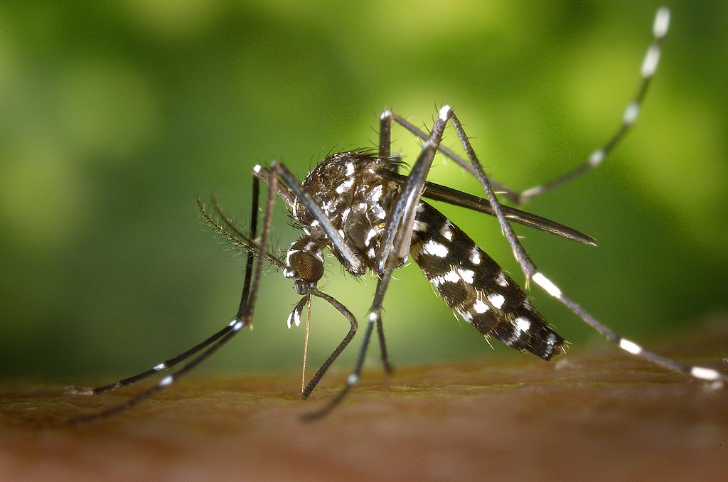Outdoor pest control for mosquitoes in Cincinnati, Dayton, Ohio and Northern Kentucky