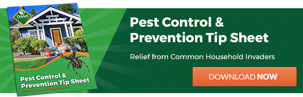 Pest Control and Prevention Tips